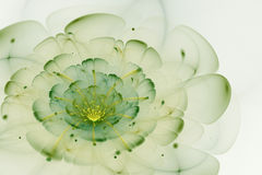 Abstrakcjonistyczny biały tło z zielenią i żółty kwiat w backli Fotografia Stock