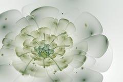 Abstrakcjonistyczny biały tło z zielonym i jasnopopielatym kwiatem w półdupkach ilustracji