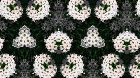 Abstrakcjonistyczny białego kwiatu fotografii wzór Zdjęcie Royalty Free