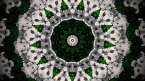 Abstrakcjonistyczny białego kwiatu mandala Zdjęcie Stock