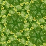 Abstrakcjonistyczny bluszcz 2 Zdjęcie Stock