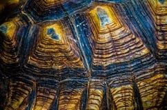 Abstrakcjonistyczny brązu wzór sulcata tortoise skorupa w zakończeniu up Obraz Stock
