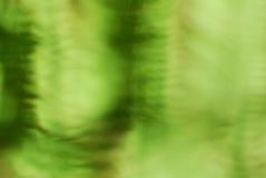 Abstrakcjonistyczny bujny zieleni bokeh tło obrazy royalty free