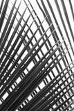 Abstrakcjonistyczny czarny i biały piękny palma liść Obrazy Royalty Free