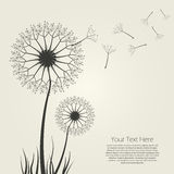 abstrakcjonistyczny dandelion Obraz Royalty Free