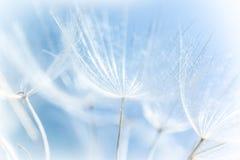Abstrakcjonistyczny dandelion tło zdjęcia royalty free