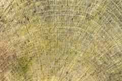 Abstrakcjonistyczny drewniany szczegół Obrazy Stock
