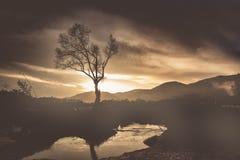 Abstrakcjonistyczny drzewo i piękny tło Zdjęcie Stock