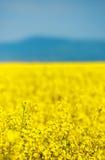 abstrakcjonistyczny dywanowy kwiat Fotografia Stock