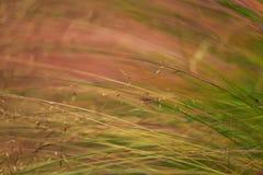 Abstrakcjonistyczny dzikiej trawy wzór Fotografia Stock