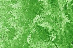 8 abstrakcjonistyczny eps ilustraci liść wektor Obraz Royalty Free