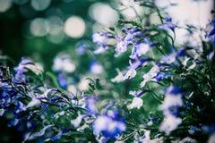 Abstrakcjonistyczny fiołkowy kwiecisty tło, wildflowers z miękką ostrością Zdjęcie Royalty Free