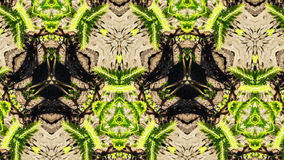 Abstrakcjonistyczny fotografia liści wzór Fotografia Royalty Free