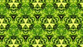 Abstrakcjonistyczny fotografia liści wzór Fotografia Stock