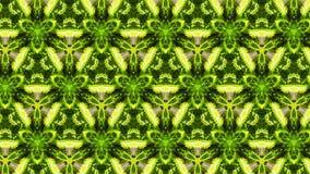 Abstrakcjonistyczny fotografia liści wzór Zdjęcie Stock