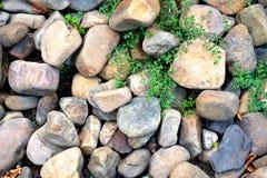 Abstrakcjonistyczny grunge tło - skały i zieleni świrzepy Zdjęcia Royalty Free