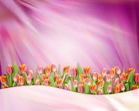 Abstrakcjonistyczny jaskrawy tło z tulipanowymi kwiatami Zdjęcie Royalty Free