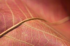 abstrakcjonistyczny jesień tła liść Zdjęcie Stock