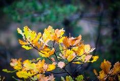 Abstrakcjonistyczny jesieni śniadanio-lunch Zdjęcia Stock
