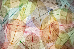 Abstrakcjonistyczny jesieni tło Fotografia Royalty Free