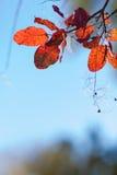 Abstrakcjonistyczny jesienny tło dowcipu ulistnienie zdjęcia royalty free