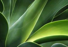 abstrakcjonistyczny kaktus Zdjęcia Royalty Free