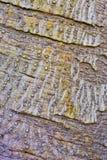 Abstrakcjonistyczny kamuflaż barkentyny wzór zdjęcie royalty free