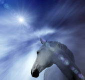 abstrakcjonistyczny koński biel Fotografia Royalty Free