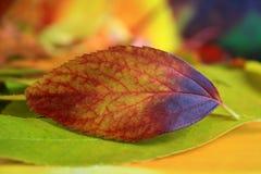 abstrakcjonistyczny kolorowy liść Obrazy Royalty Free