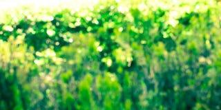 Abstrakcjonistyczny kolorowy natury bokeh tła sztandar Obraz Royalty Free