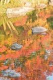 Abstrakcjonistyczny kolorowy odbicie wibrujący Japońscy jesień liście klonowi na stawie nawadnia Obraz Stock