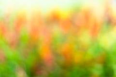 Abstrakcjonistyczny kolorowy wiosny tło Fotografia Royalty Free