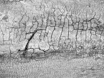abstrakcjonistyczny krekingowy drewno Zdjęcia Stock