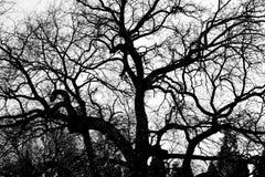 abstrakcjonistyczny kreskowy drzewo Zdjęcia Stock