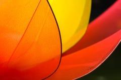 Abstrakcjonistyczny kwiat Fotografia Stock