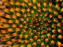 abstrakcjonistyczny kwiat Zdjęcia Stock