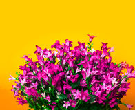 Abstrakcjonistyczny kwiat granicy projekt Obraz Royalty Free