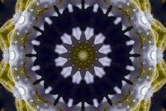 Abstrakcjonistyczny kwiat i krople Fotografia Stock