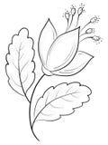 Abstrakcjonistyczny kwiat, kontury Obrazy Royalty Free