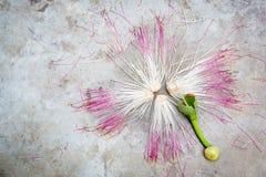 Abstrakcjonistyczny kwiat na betonowym podłogowym tle Zdjęcie Royalty Free