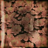 Abstrakcjonistyczny kwiat sztuki tło Obrazy Royalty Free
