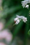 Abstrakcjonistyczny kwiat w rocznika stylu Zdjęcia Royalty Free