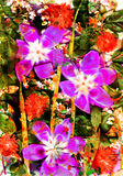 abstrakcjonistyczny kwiatu kwadrata lato Obrazy Stock