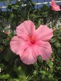 abstrakcjonistyczny kwiatu po?lubnika ilustraci wektor zdjęcie stock