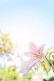 Abstrakcjonistyczny kwiatu tło, kwitnie Świeżego kolor w ranku Zdjęcia Stock