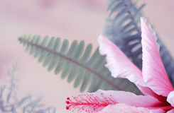 Abstrakcjonistyczny kwiatu tło Zdjęcia Royalty Free