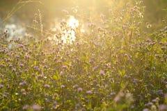 Abstrakcjonistyczny kwiatu wieczór zmierzch Fotografia Stock