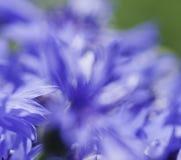 Abstrakcjonistyczny kwiatu zbliżenie Fotografia Royalty Free