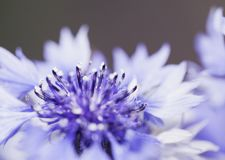 Abstrakcjonistyczny kwiatu zbliżenie Zdjęcia Stock