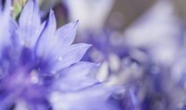 Abstrakcjonistyczny kwiatu zbliżenie Obrazy Stock
